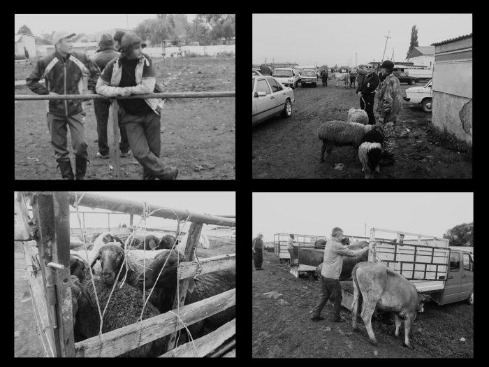 Viehmarkt Karakol Kirgistan Zentralasien